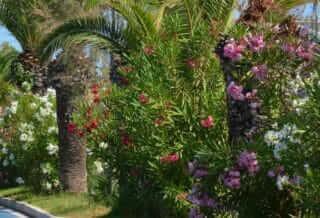 Spiaggia-alba-adriatica-albergo-Medi-garden-resort-6